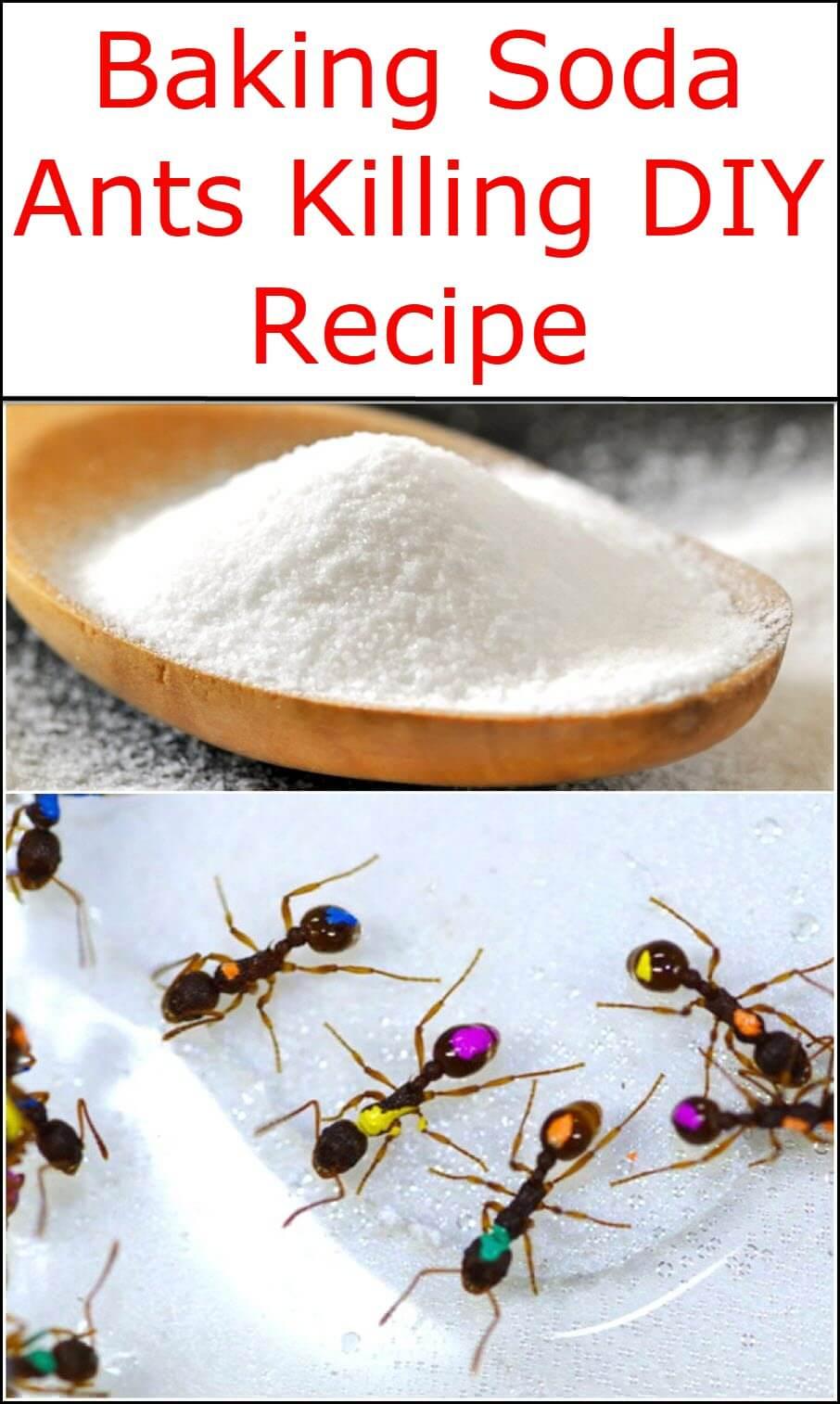 Baking Soda Ants Killing DIY Recipe